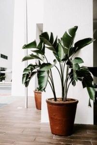 fake office plants