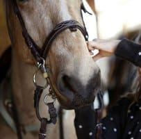 Girl Dies after horse accident White Mountains Riding Club Horse Show