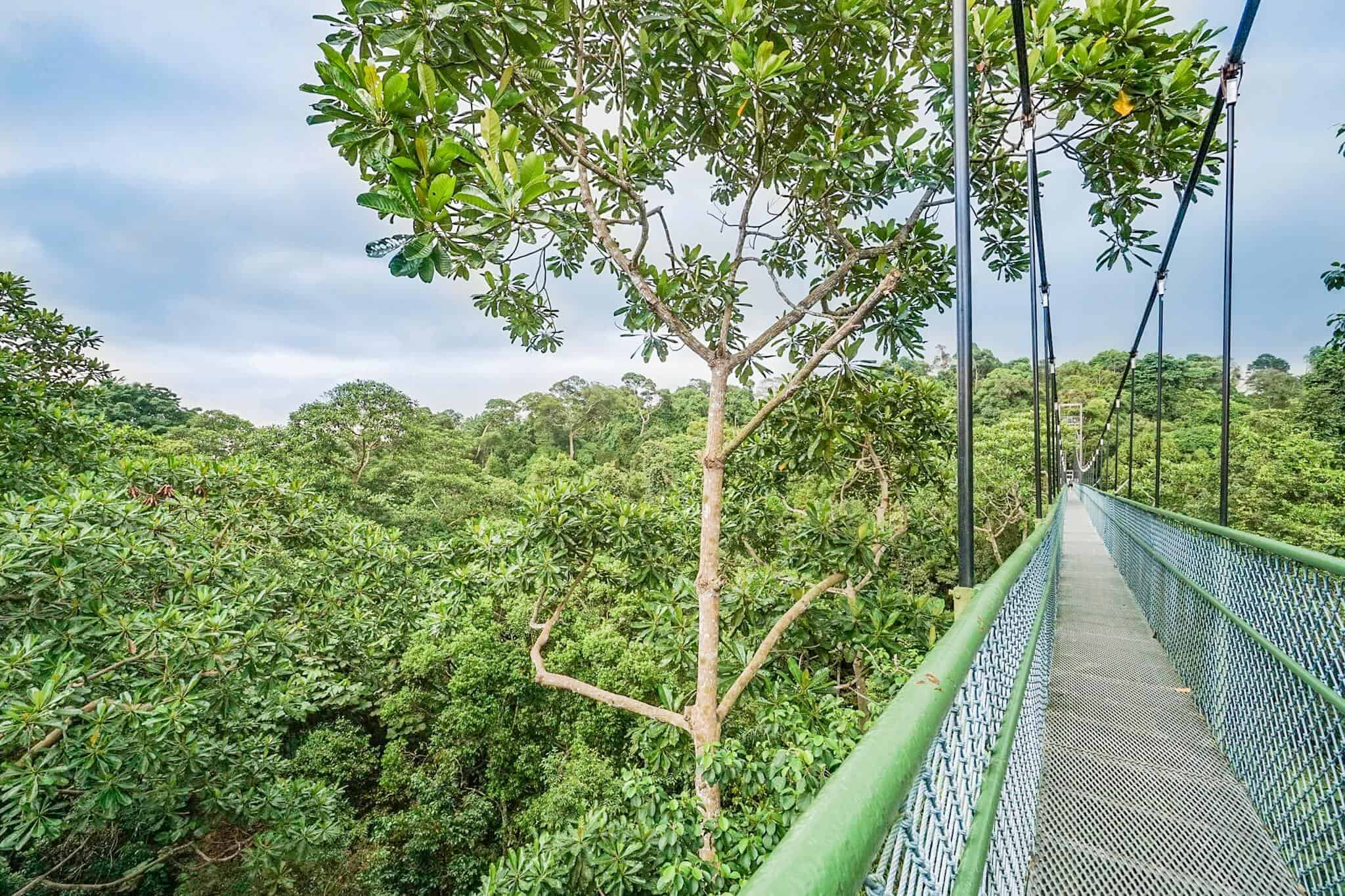 Hiking in Singapore – TreeTop Walk – MacRitchie Nature Trail