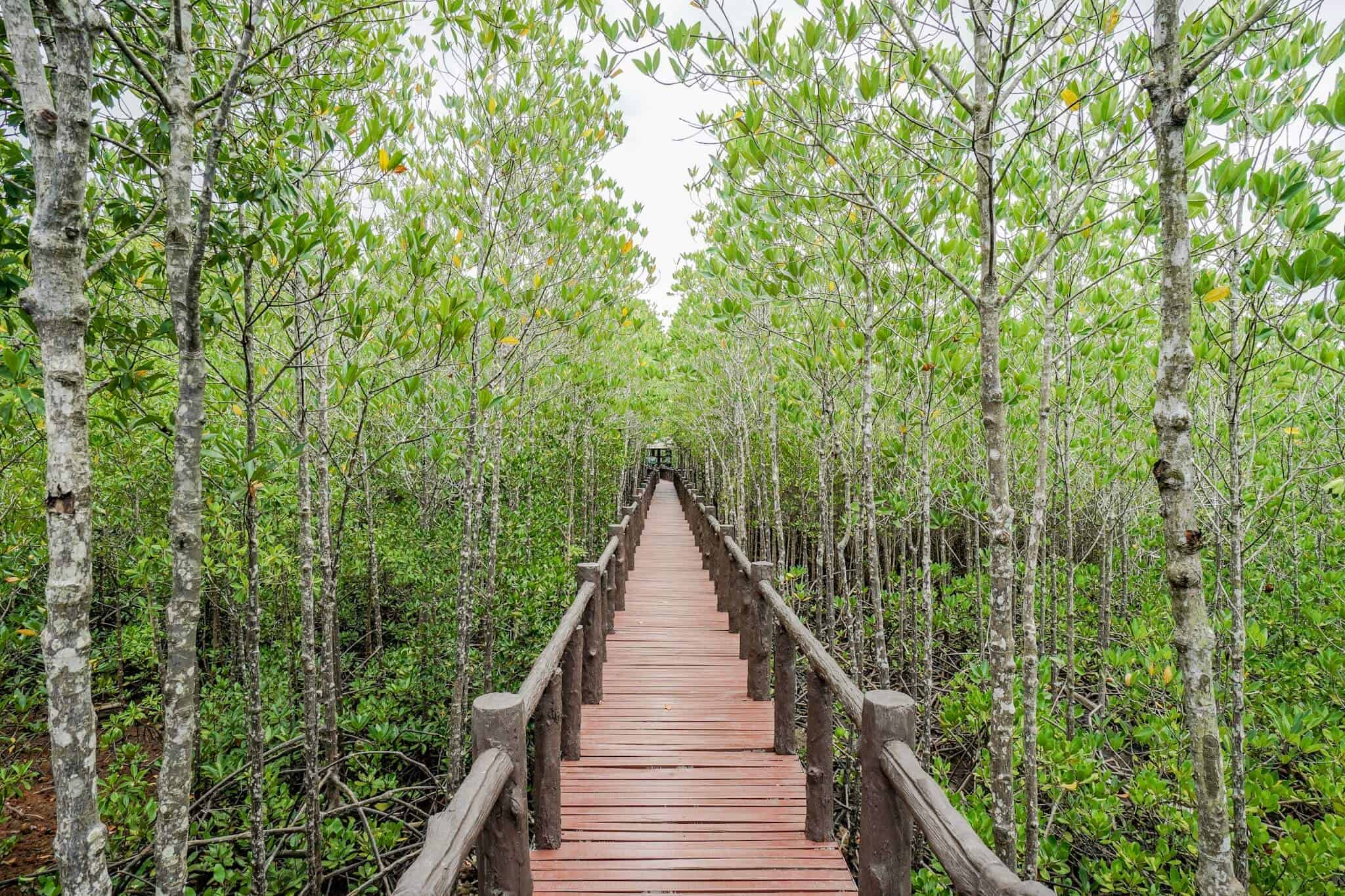 Mu Koh Chumphon Nationalpark – Mangrovenwald