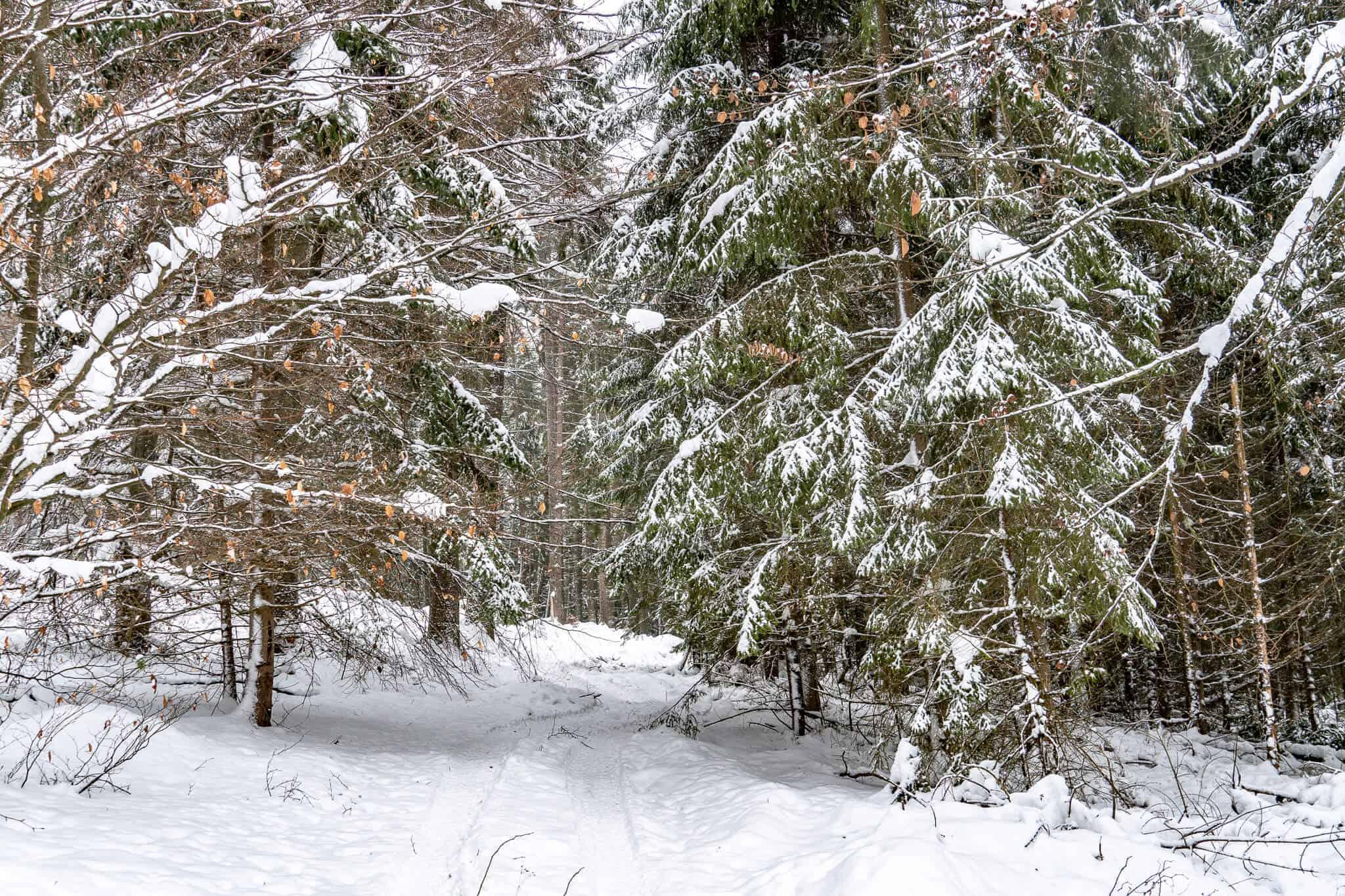 Verschneiter Wanderweg Feldberg