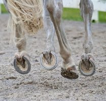 Equine Footing Experts Collaborate on Arena Surfaces