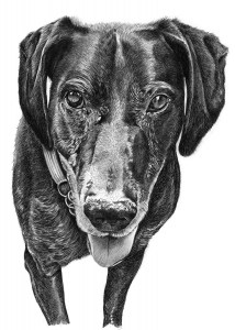 Pencil Sketch of Dog