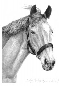 Pencil Drawing of Horse, Waterford Star