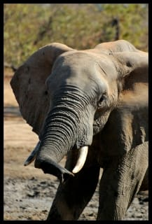 gonarezhou-elephants