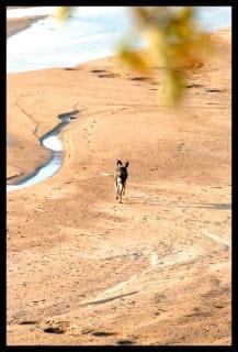 wild-dog-gonarezhou