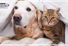 Reduce Pet Dander Allergies