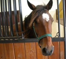 UPDATE: Oklahoma's Displaced Horses Await Owners Return