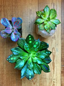 succulents painted with paint