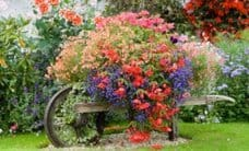 english-country-garden-flowers-resized-600