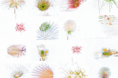 Wrapping Paper Background