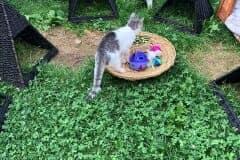 Katzen-Freigehege Katzenhoffnung Steiermark - das Paradies für HandiCATs / behinderte Katzen