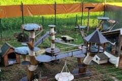 Katzenfreigehege mit Naturkratzbaum - Kratzhimmel Katzenhoffnung Steiermark - das Paradies für HandiCATs / behinderte Katzen