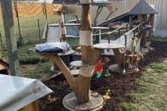 Katzenfreigehege mit Naturkratzbaum Katzenhoffnung Steiermark - das Paradies für HandiCATs / behinderte Katzen