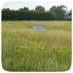 Tent in long grass