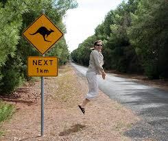 kangaroo-stop