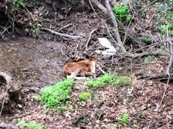 valentine foal stranded in California ravine before rescue on Valentine's Day 2016
