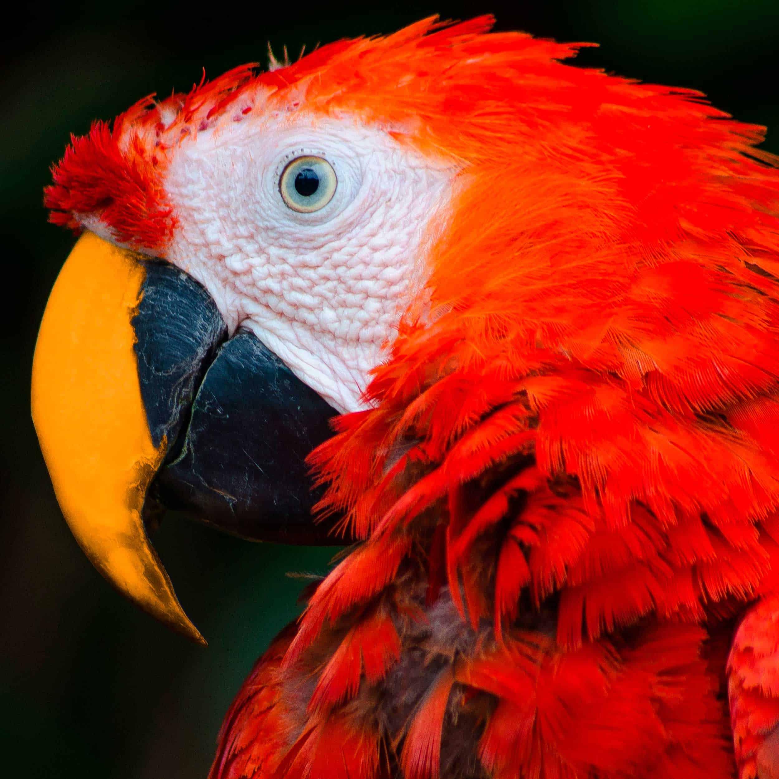 pappagallo-design
