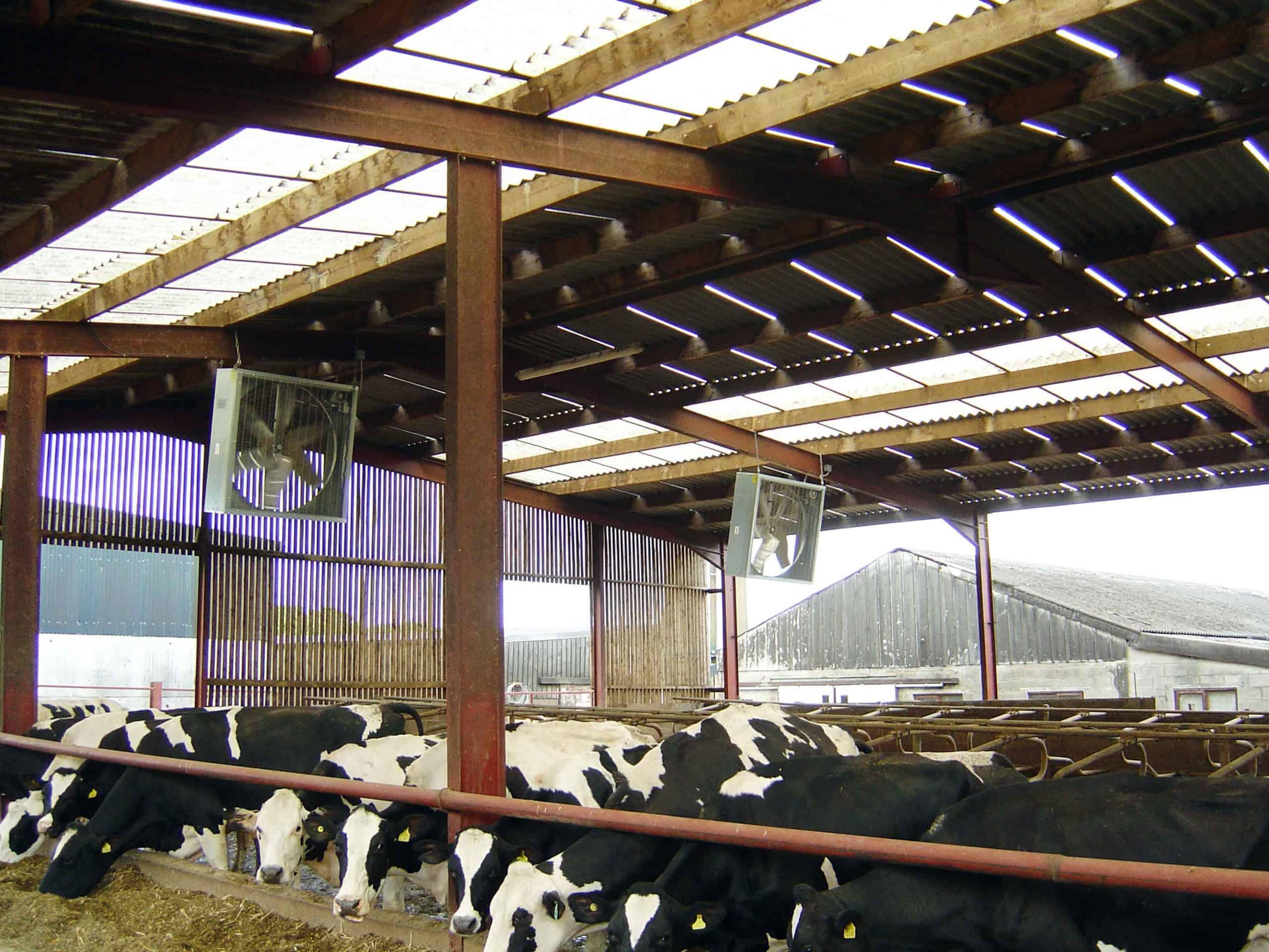 Das Belüftungssystem für Viehbestände trägt zur Reduzierung von Hitzestress bei
