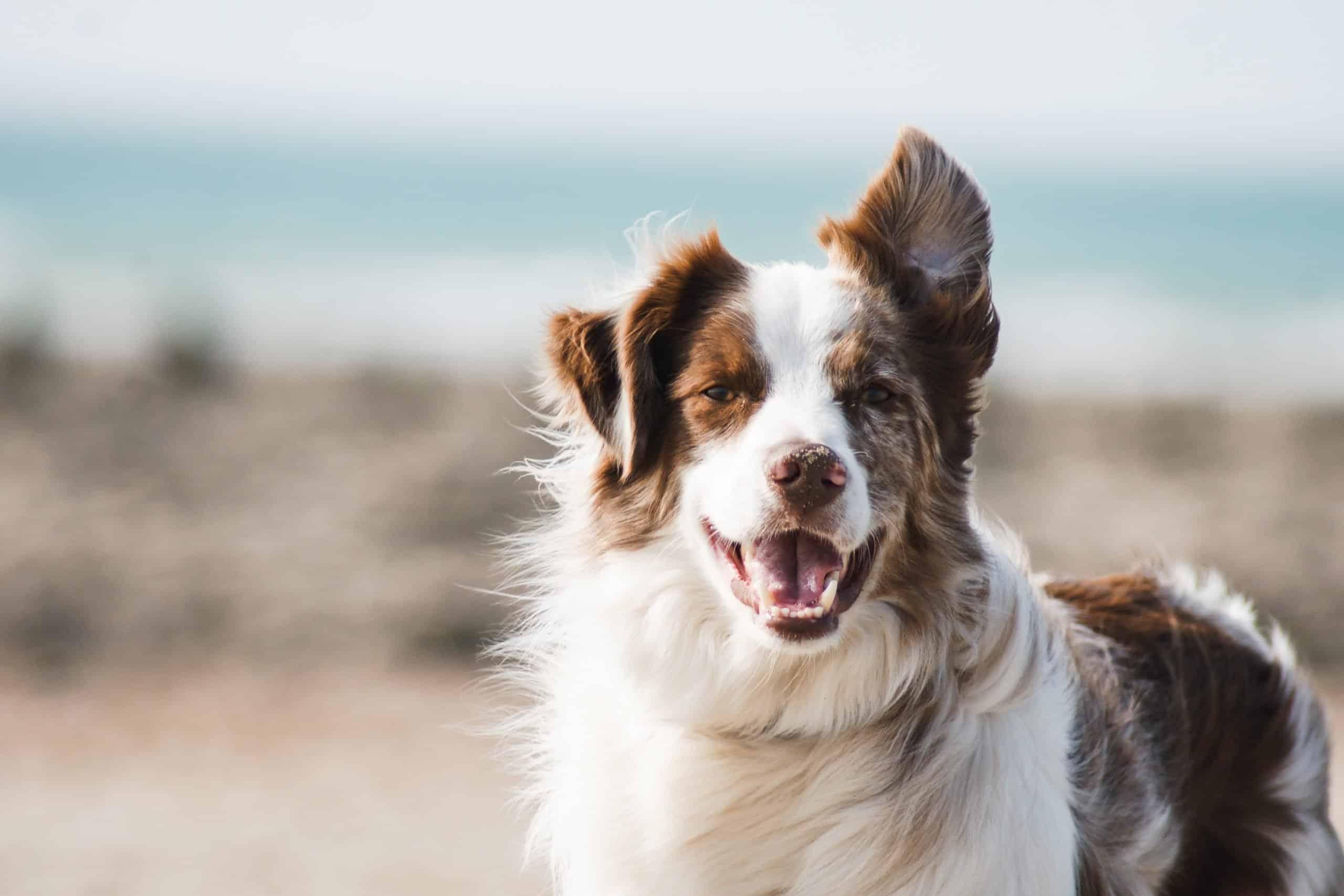 Beautiful dog on the beach.