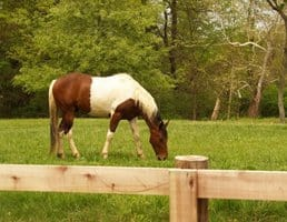 10 Hot-Weather Tips for Horses