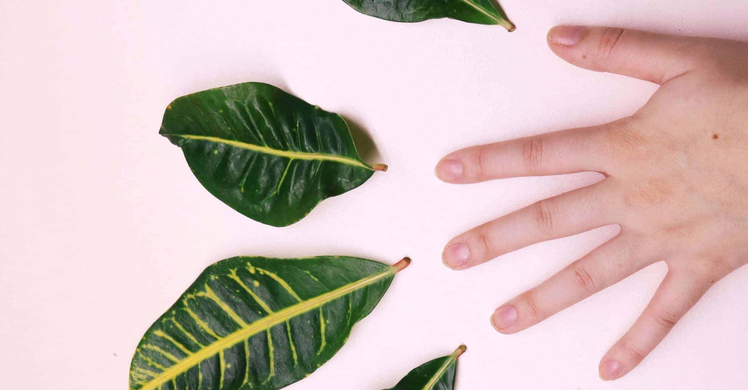 green-tea-for-skin-6374825