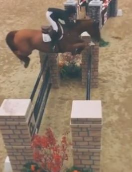 Free Style VH Polderhof Dies in WEF International Ring