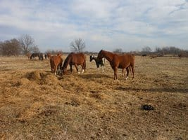 More Charges Expected in Oklahoma Horse Abuse Case
