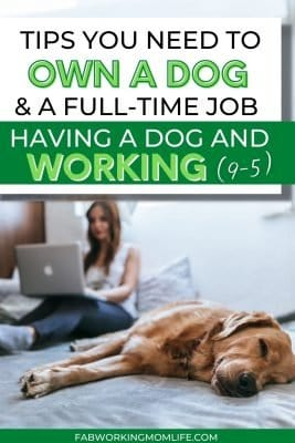 Having a dog while working 9-5