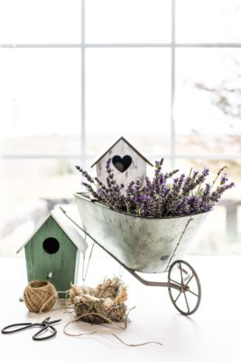How to Dry Lavender Flowers 3