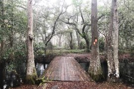 The bridge over Big Creek at Lake Louisa State Park in Clermont. (Photo: Bonnie Gross)