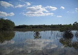 The sky reflected along Everglades National Park Nine Mile Pond canoe trail