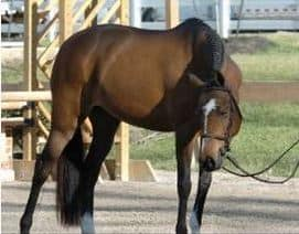Tresie Wallace Tennessee Hunter/Jumper Trainer Arrested for Alleged Pony Theft