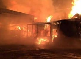 Barn Fire Kills 5 Horses including Police Horse
