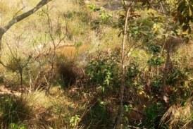 vende-se fazenda de 850 mil na região de camapuã