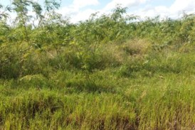 vende-se fazenda por 30 milhões na região de porto murtinho