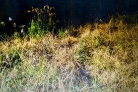 Vendo terreno no Bairro Cidade Nova Cd.36