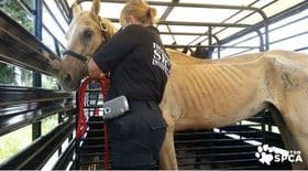 Texas Quarter Horse Breeders Arrested for Animal Cruelty