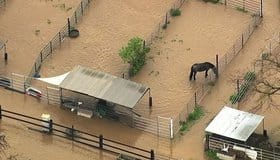 Dozens of horses remain stranded in contaminated flood water at a San Jose, CA boarding stable.