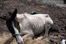 FL Horse Rescue Operator Charged with Animal Cruelty