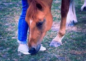 California officials imposed a quarantine at a San Mateo County horse facility after testing confirmed a pony positive for EHM.