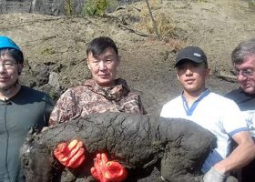 Perfectly preserved 40,000-year-old horse found in Siberia, scientists say