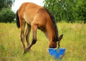 Is your horse's feed safe?