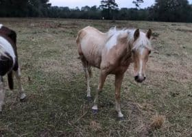 18 Horses Seized from Thompson Kill Pen