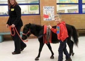 Miniature Horses Head of the Class in Maryland
