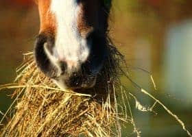 How can you protect your horses from equisetum - a weed toxic to horses?