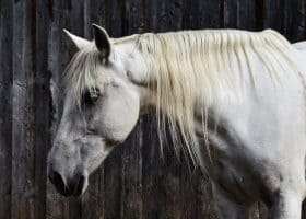 Colorado EIA State Quarantines Fremont County Horse Stable