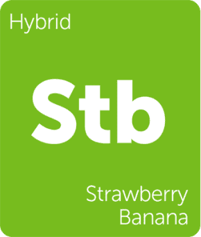 Strawnana Terpenes (Strawberry Banana)
