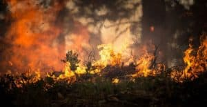 Пожароопасный сезон в Сергиево посадском районе