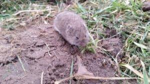 Мышь в траве укусила ребенка